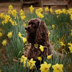 Spring Begins This Weekend!