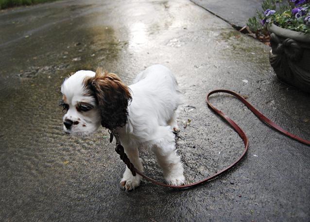 rainchip