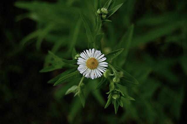 2flower