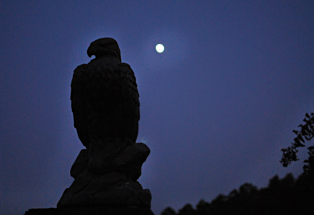 nightime eagle
