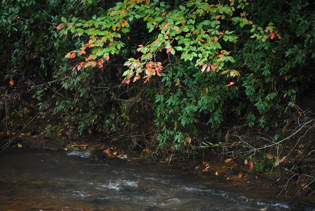 Leaves-waterWeb