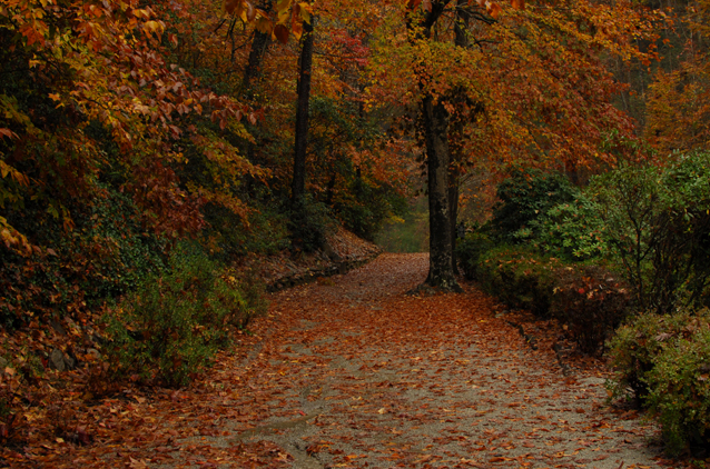 Path-leavesWeb