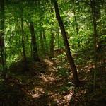 Walking On The Unicoi Trail
