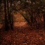 Treking through The Woods