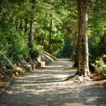 Sunday Morning Pathway