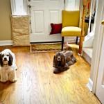 Dog Barricade!