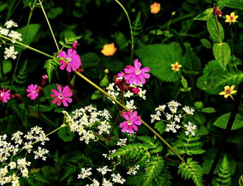 By Chance Garden