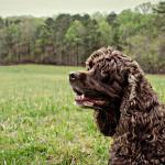 I love This Dog!