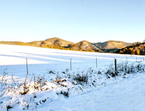 Snow Day Photos