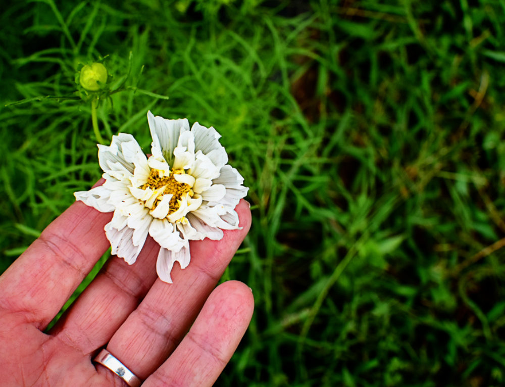 Enchantment at Currahee Gardens