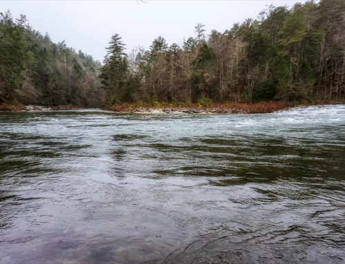 Wintering along the Chattooga River